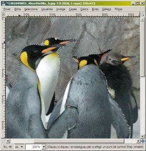 Ja hem seleccionat els pinguins!
